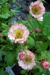 Geum East Of Eden 009
