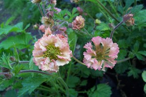 Geum Magic Toybox