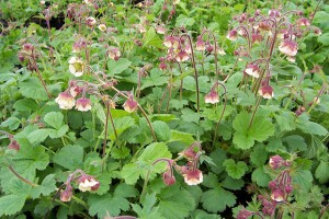 Geum Turnpike Tales