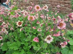 Geum Stevie Nicks